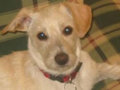 Thalys, chien