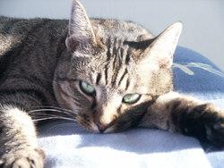 Carambar, chat Gouttière