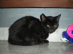 Epsilon, chat Gouttière