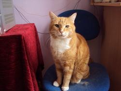 Rubie, chat Gouttière