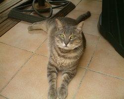 Tigrou , chat Gouttière