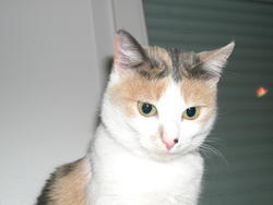 Cannelle, chat