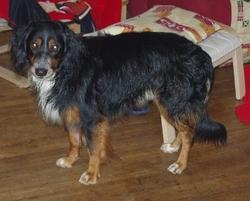 Hélios Ou  Loulou, chien