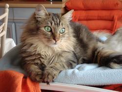Moustic, chat Gouttière