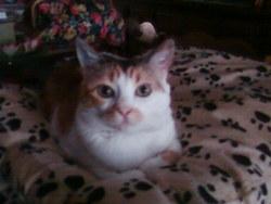 Molly, chat Gouttière