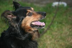 Pythagore, chien