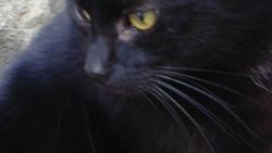 Nocturne, chat Gouttière