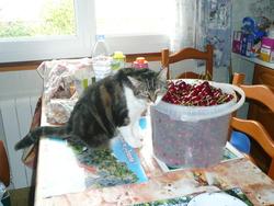Pounette, chat