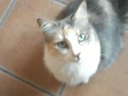 Mimine Frisette, chat