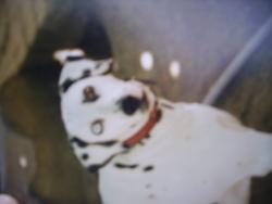 Nora, chien