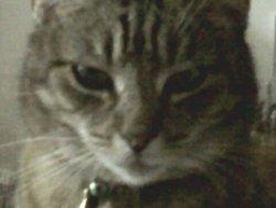 Babou, chat Gouttière