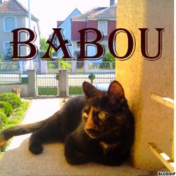 Babou, chat Européen
