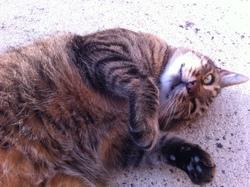 Babouche, chat Gouttière