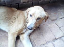 Baboule, chien