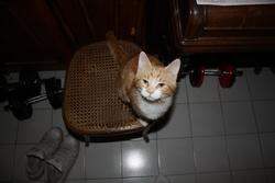Baboulinet, chat Gouttière
