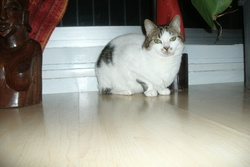 Baboune, chat