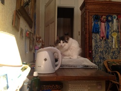 Baccara Delft Du Nord, chat