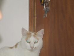 Bachie, chat Gouttière