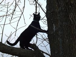 Baggie, chat Gouttière