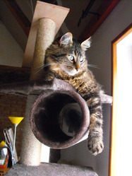 Baggy, chat Gouttière