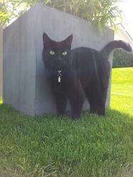 Bagheera, chat Gouttière