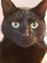 Bagheera, chaton Gouttière