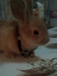 Daisy, rongeur Lapin
