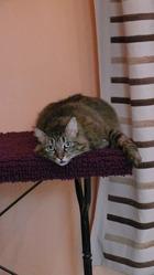 Baia, chat Gouttière