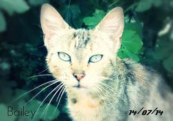 Bailey, chat Gouttière