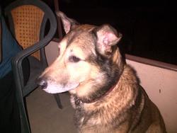 Balko, chien