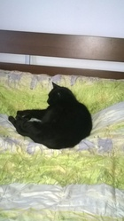 Balou , chat Gouttière