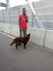 Balou, chien Cane Corso