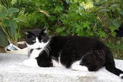 Balou Au Paradie, chat Gouttière
