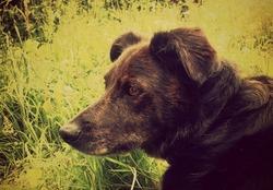 Balzac, chien