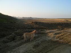 Balzac, chien Labrador Retriever