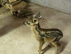 Bambi, autres