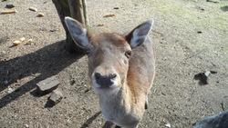 Bambie, autres