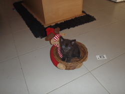 Bamboo, chat Gouttière