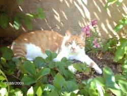 Bambou Dcd, chat Gouttière