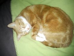 Bambou, chat Gouttière