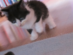Banbou, chat