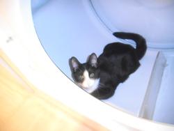 Bandit, chat Gouttière