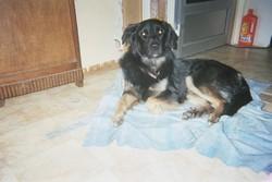 Bandit, chien