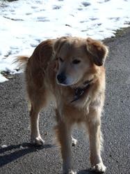 Bandy, chien