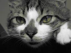 Bandy, chat Gouttière