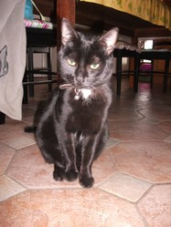 Bango, chat Gouttière