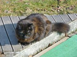 Barnabée, chat
