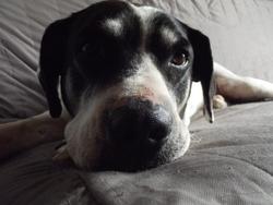Barney, chien