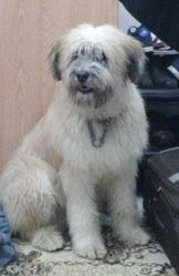 Baron , chien