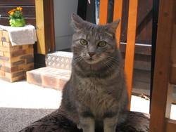 Barth, chat Gouttière